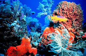 Respect Tropical Reefs